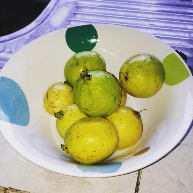 grateful blessed guava trinidad
