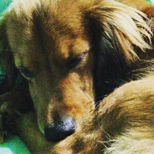 Sassy napping dockerdog dogmother adopted trinidad animalsofinstagram