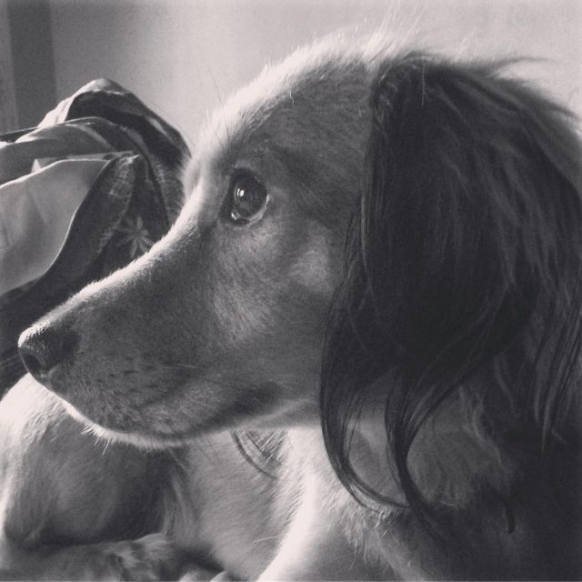 My other endless love dogmother dockerdog animalsofinstagram